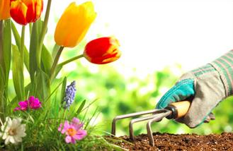 School Yard Stewards Spring Volunteer Sign Up