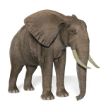 stock_png_elephant_by_on_wallpaper_hd.png