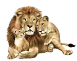 lion_PNG555.png
